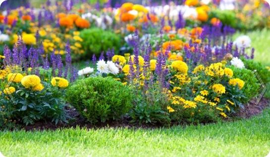 какие цветы сажают весной