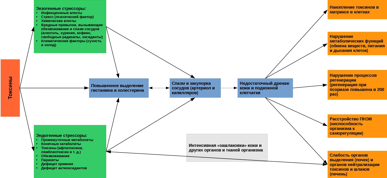 Схема развития псориатического поражения кожи