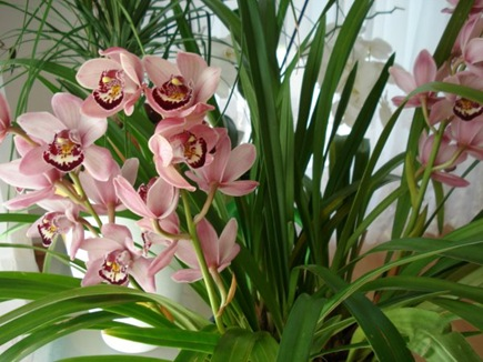цветущие комнатные растения