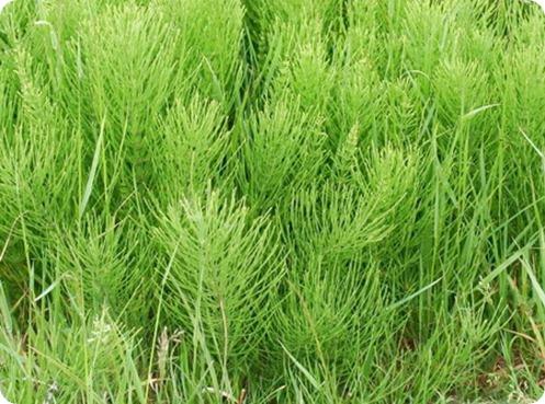 травы для очищения организма