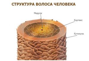 структура волоса человека до ламинирования