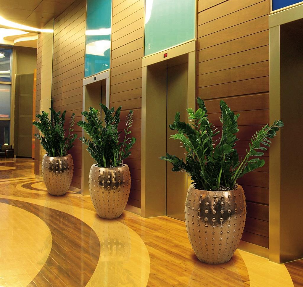 Замиокулькас в горшках украшают помещение